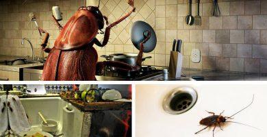 Las cucarachas suelen llegar a la cocina por las cañerías