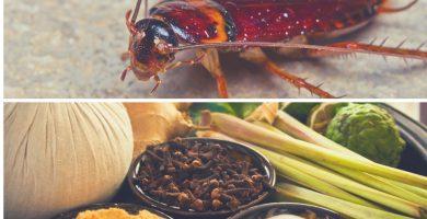 Los remedios caseros son el método más efectivo para matar cucarachas de forma natural