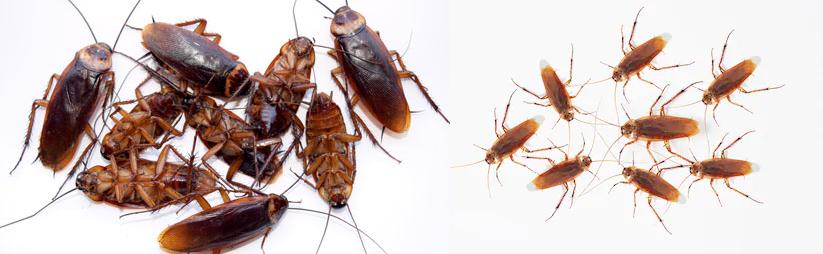 Eliminar cucarachas en falso techo