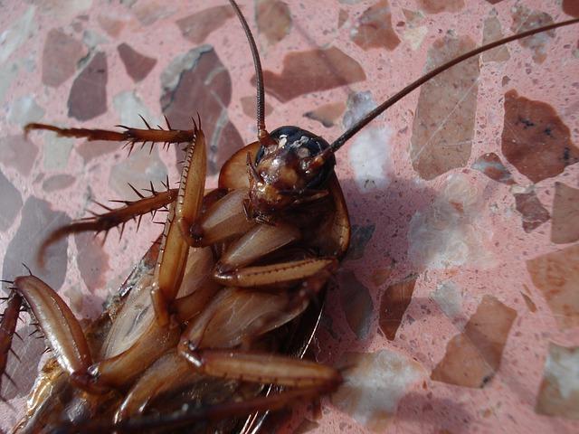 Las cucarachas adoran nuestro hogar.