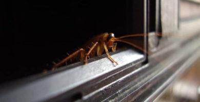 Cucarachas saliendo de un microondas