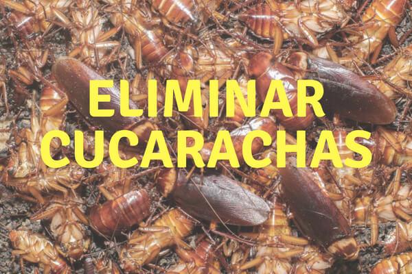 Muchas cucarachas muertas después de contratar un servicio de control de plagas