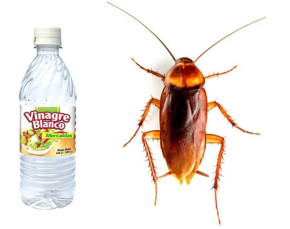 El vinagre realmente no mata a las cucarachas como se piensa mucha gente
