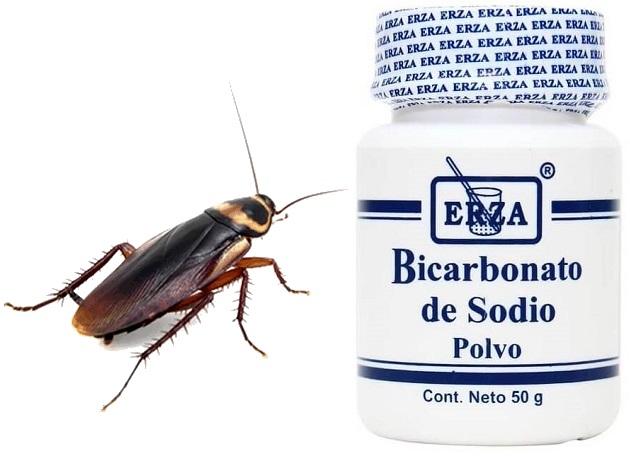El bicarbonato de sodio mata a la cucaracha que lo ingiere sin darse cuenta