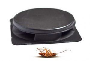 cajas adhesivas para eliminar las cucarachas de banda marrón