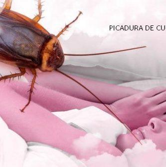 Se han confirmado y registrado casos de picadura de cucaracha