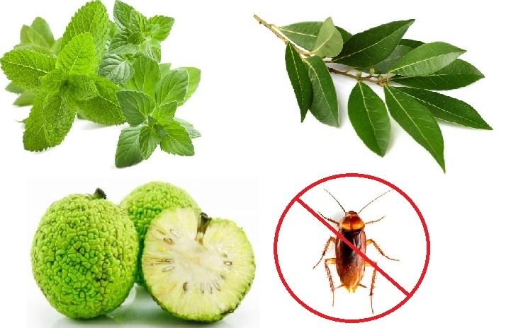 En la naturaleza existen plantas que ahuyentan las cucarachas